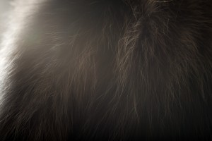 pelliccia